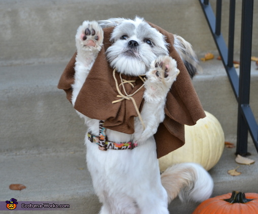Ewok Dog | Daytripfinder blog