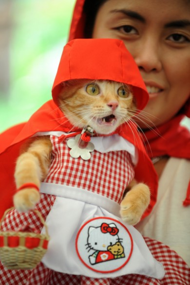 Red Riding Cat | Daytripfinder blog
