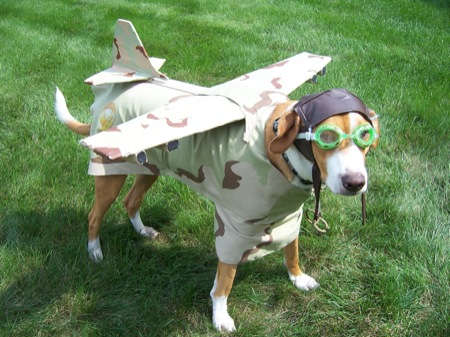 airplane dog costume | Daytripfinder