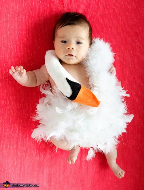 bjork swan