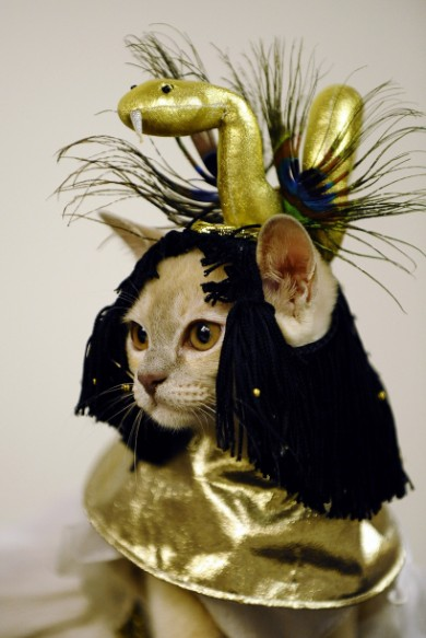 Egyptian Cat Costume | Daytipfinder blog