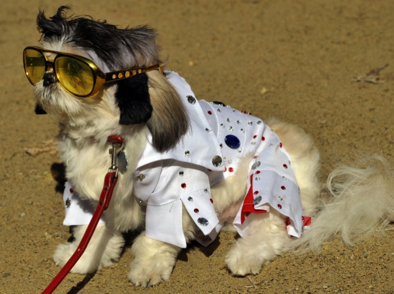 Elvis Dog costume | Daytripfinder blog