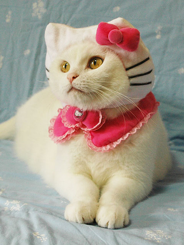 Hello Kitty Cat costume | Daytripfinder blog