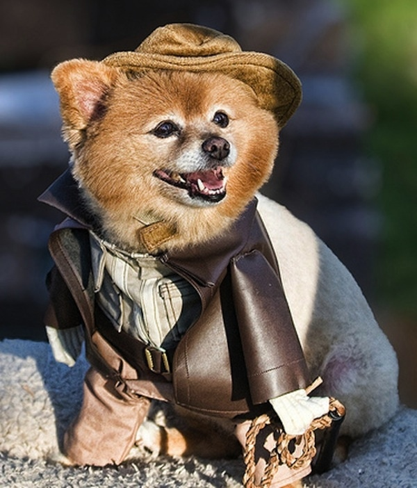 Indiana Jones Dog Costume | Daytripfinder blog