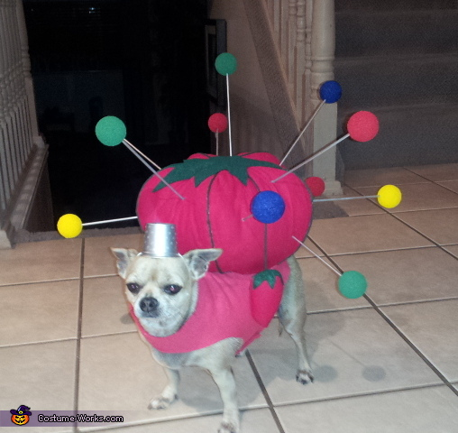 Dog pin cushion costume | Daytripfinder blog