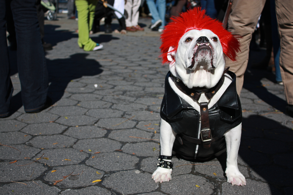 Rocker Dog | Daytripfinder blog