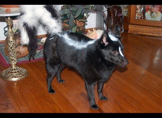 skunk dog | Daytripfinder blog