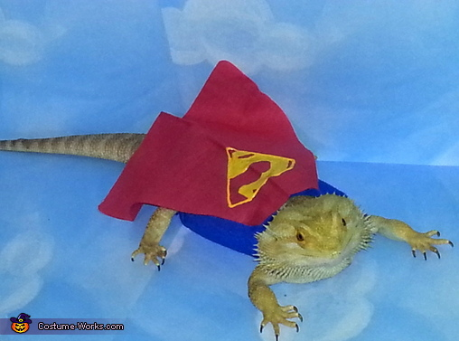 Super Lizard | Daytripfinder blog